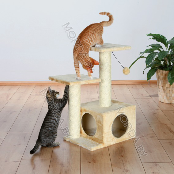most effective cat litter for odor control